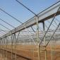 养殖大棚 大棚方管 钢管厂家 大棚管 现货批发 热镀锌椭圆管
